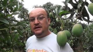 Uso de biofertilizantes ECOCAMPO en mango