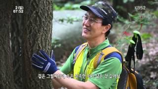 [KBS2영상앨범산] 여름의 향기 - 충남 팔봉산