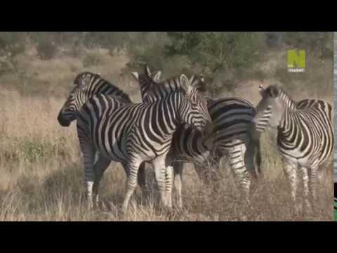 Удивительная природа Африки 4 серия