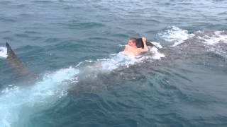 Adolescente monta ballena tiburón en Florida