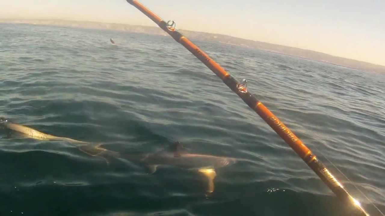 Fishing diaries 17 la jolla kayak fishing thresher for La jolla fishing