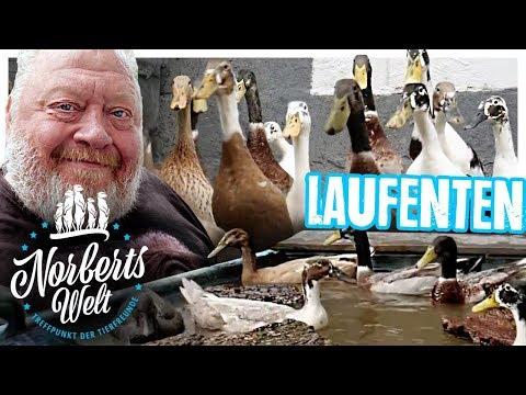 LANGGEZOGENES TIER? | Die LAUFENTE müsst ihr sehen!  | NORBERTS WELT | Zoo Zajac