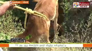 70 அடி ஆழ கிணற்றில் தவறி விழுந்த கன்றுக்குட்டி | http://festyy.com/wXTvtSErode