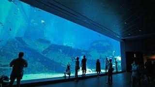 Spending the day at the SEA Aquarium, Sentosa, Singapore