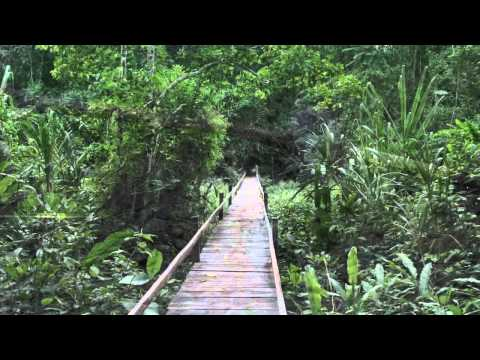 Highlights of Bolivia (Part 2) - The Amazon Basin featuring Madidi National Park