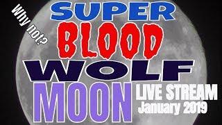 (EPIC FAIL) Watching The Super Blood Wolf Moon Lunar Eclipse 2019