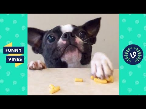 TRY NOT TO LAUGH - Funny Animals Compilation | Cute Dog Videos | Funny Vines April 2018