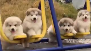 FUNNY CATS AND DOGS FAILS | VINES | COMPILATIONS | THUG LIFE | THE BEST ANIMALS FAILS