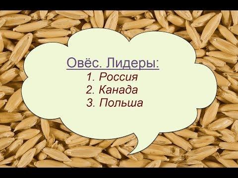 Овёс: мировое производство, экспорт, импорт