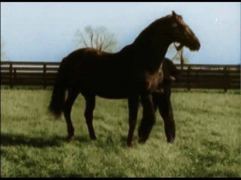 Seabiscuit: The Lost Documenta... is listed (or ranked) 8 on the list The Best Horse Racing Movies