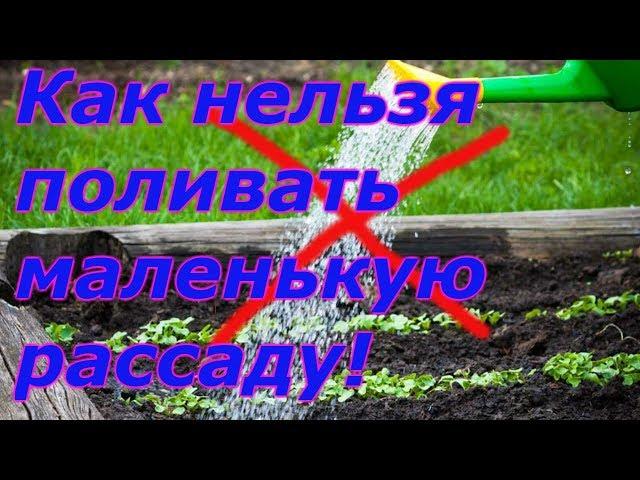 """""""ДО""""  И """" ПОСЛЕ"""" ВСХОДОВ-ПРАВИЛЬНЫЙ ПОЛИВ РАССАДЫ"""