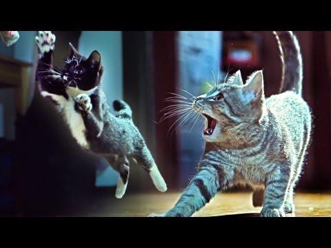 思わず見入ってしまう!! 窃盗団を撃退する子猫