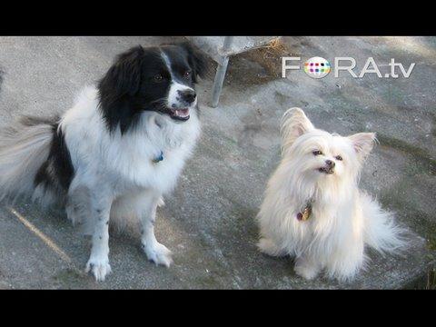 Effective Dog Training - Ian Dunbar video