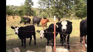 Cows Won't Laugh At My Jokes
