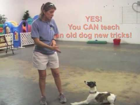 Villa La PAWS Training Tip: Reliable Name Response