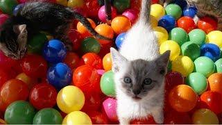 Ball Pit + Kittens = Lots Of Cute Fun!!