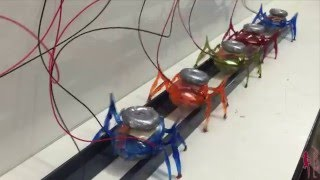 Let's all Pull Together: Team of 100 grams µTug Microrobots Pulls a 1800kg Car