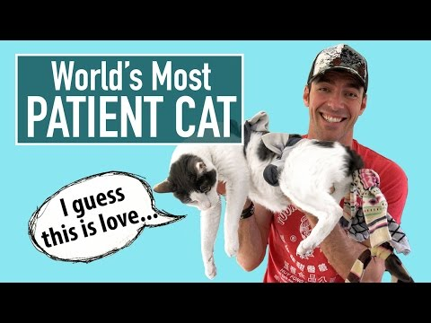 World's Most Patient Cat