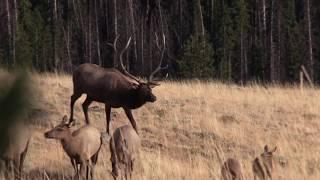 Backcountry Elk Hunting 2018