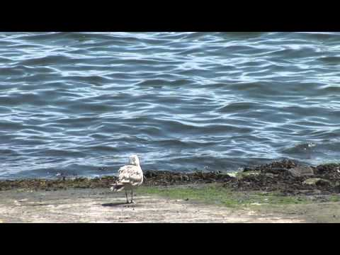 Island Institute  Conserving Maine's Biodiversity HD