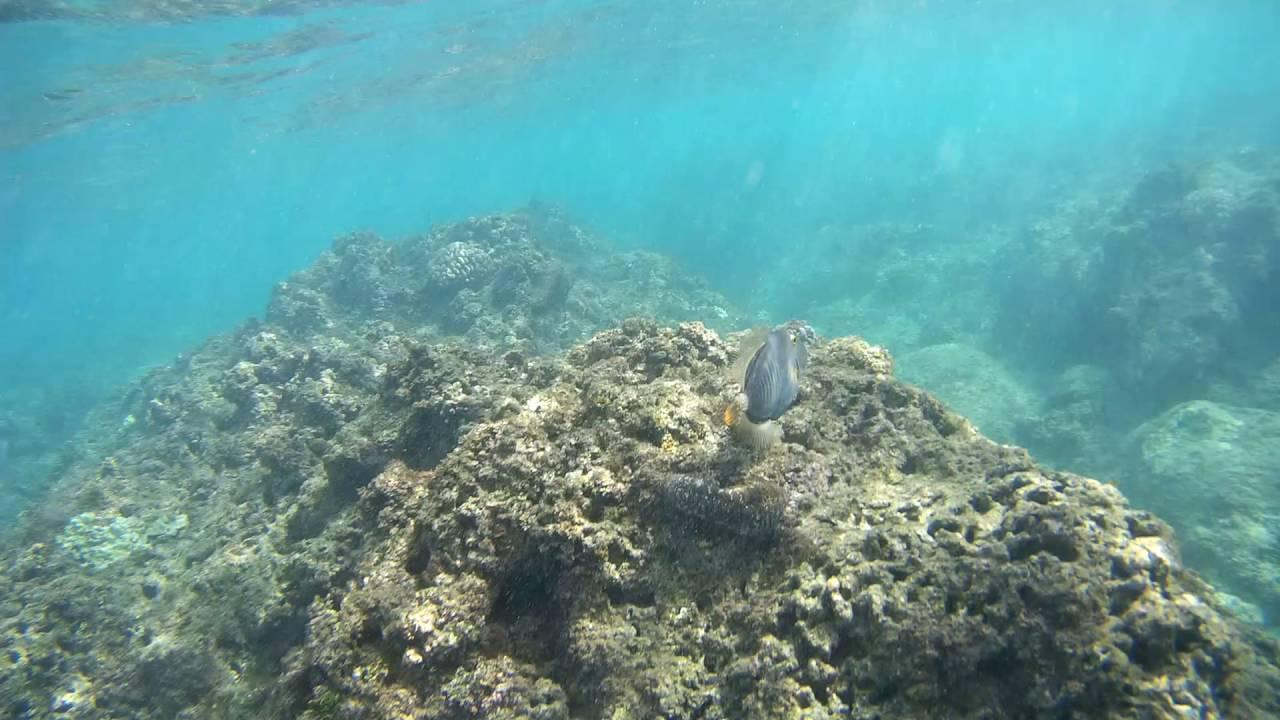 Snorkeling at Hideaway Beach Kauai