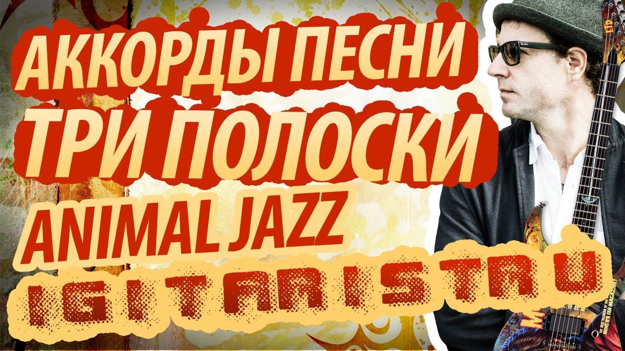 animal jazz аккорды: