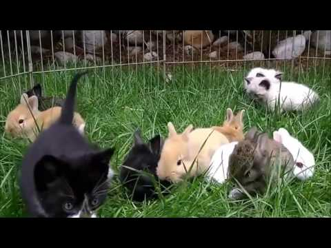 Kittens and rabbits playing together