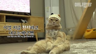 Were you a human in your past life? This cat sits like one lol (Garfield irl)