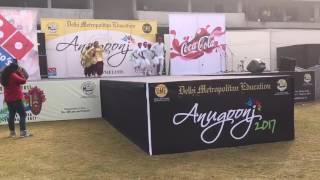 Amity Law School,Delhi Bhangra performance at Anugoonj 2017