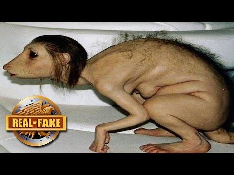 piccinini human animal hybrids