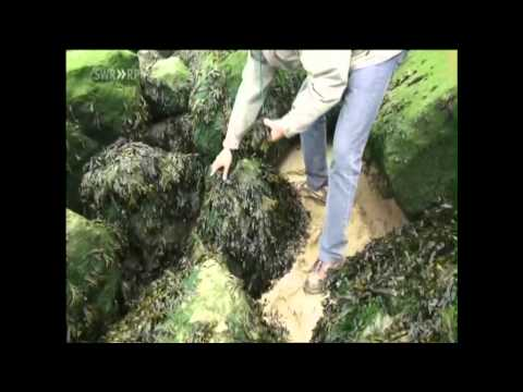 UK AND EUROPE Nuclear Waste Disposal Documentary
