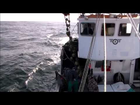 Purse Seine Fishing South Africa Part 1