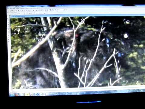 M.k.davis Discusses Some More Photos From The Siberian Bigfoot Collection. video