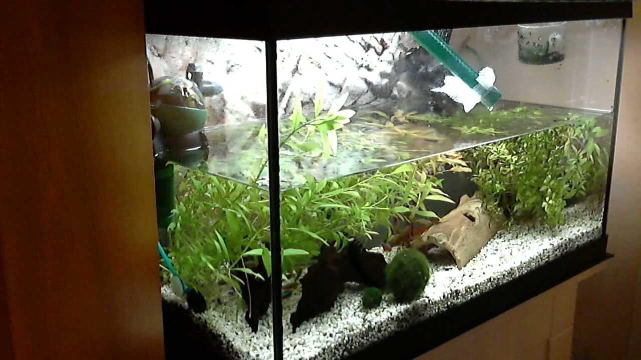 Aquarium Wasserwechsel mit Bauanleitung  YouTu