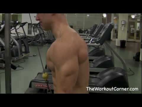 Tricep Workout - 5 Tricep Exercises for Mass Image 1