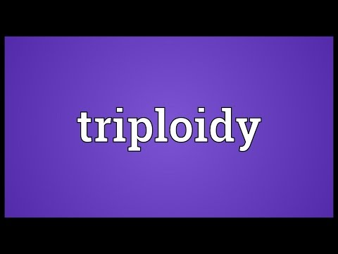 Header of triploidy