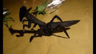 Origami Insects From Robert Lang