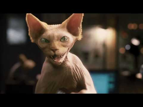 Cats & Dogs - Die Rache der Kitty Kahlohr | Deutscher Trailer HD