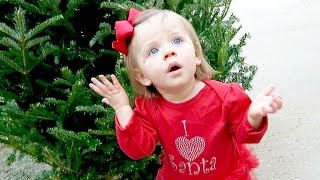 ADORABLE CHRISTMAS TREE REACTION!
