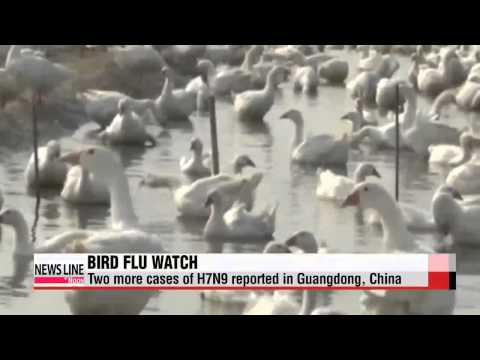 Two more cases of H7N9 reported in Guangdong, China   중국 남부, 홍콩 AI 비상... 감염환자 속출