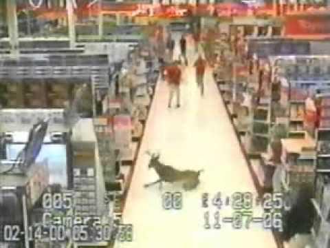 Caught On Tape: Deer Runs Through Store