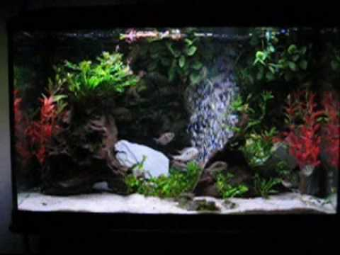 Fish tank renovations 29 gal empty 38 gal sa cichlids for 38 gallon fish tank