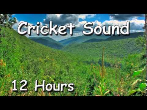 WAYS TO REDUCE STRESS - Cricket Sound 12Hr for relaxation - mindfulness based stress reduction