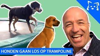Honden TOM CORONEL GESTOLEN door Martin?? & Honden LOS OP TRAMPOLINE - Fikkie Famous