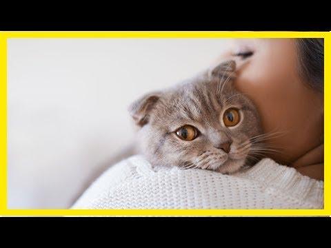 Das 1×1 der Katzenerziehung