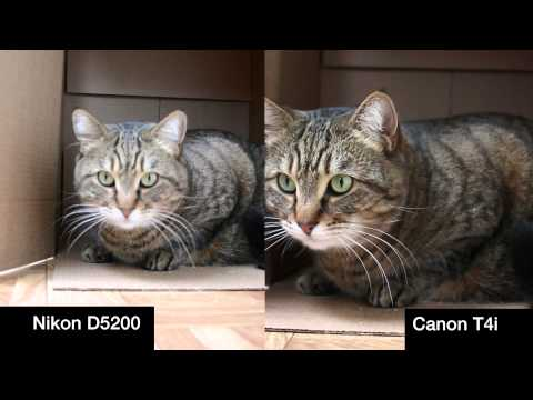 T4i vs D5200 -1080P 24p- Auto Everything Video Quality