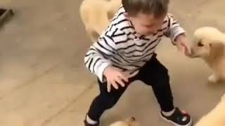 Funny dogs and babies video compilation 2019