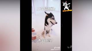 Funny Animals Compilation #8 - Cute Puppies