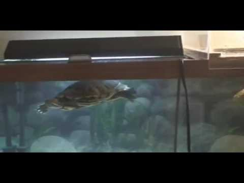 75 gallon Turtle Tank Set Up. Homemade Basking Deck