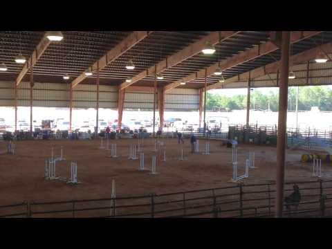 Swamp Dog Agility Trial - Kiln, MS - Oct 26, 2013